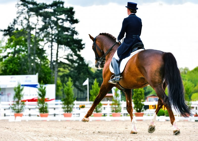 dressage horse and woman rider - extended trot
