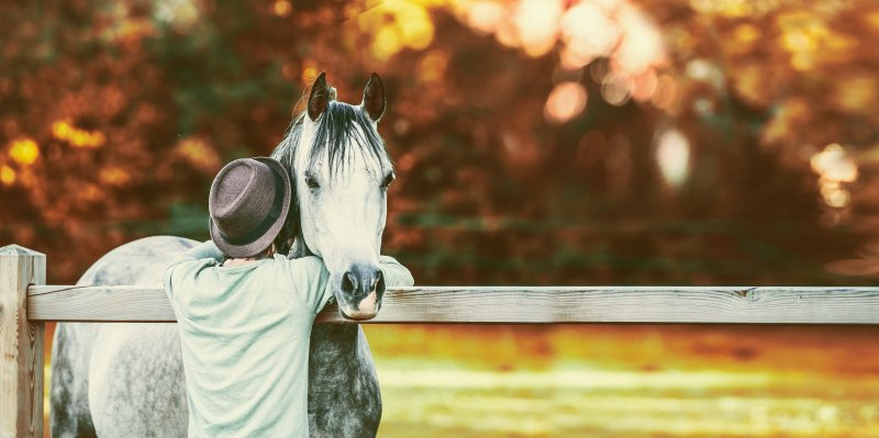Guy bumped his head in neck of horse at fence in stable on background of autumn foliage