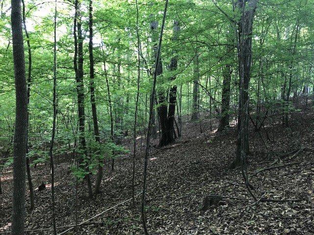 Photo 5 Woods