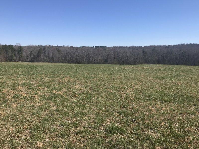 Pasture (2)